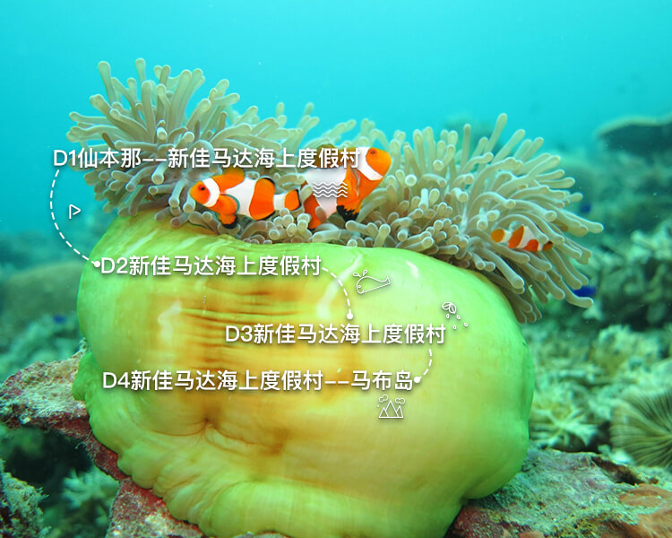 马布岛PADI开放水域潜水员OW四日课程游