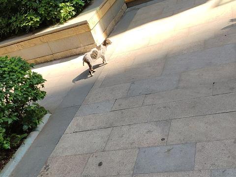 怡翠广场旅游景点图片