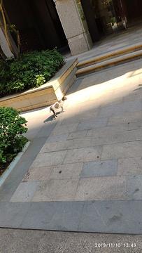 怡翠广场的图片