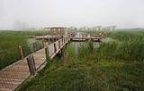 东丽湖三期湿地公园