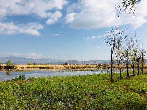 大理市罗时江生态湿地旅游景点图片