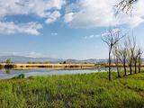 大理市罗时江生态湿地