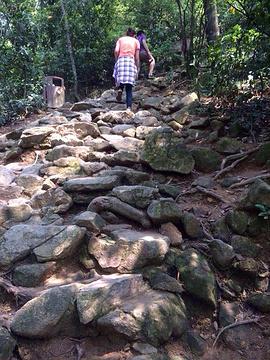 塘朗山郊野公园