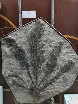 中国地质博物馆本溪馆的图片