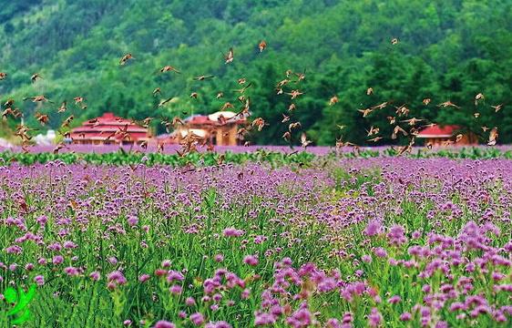 英山四季花海旅游景点图片