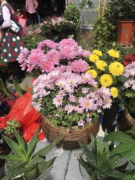 花之都花卉批发中心