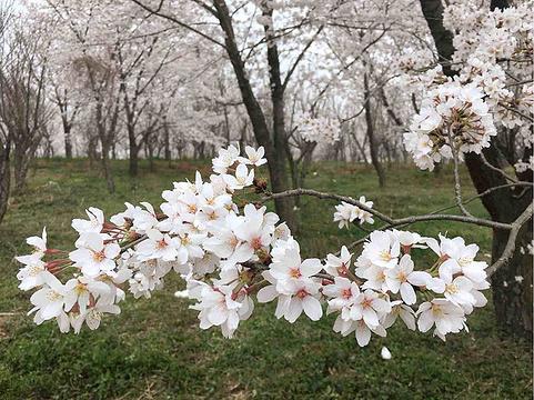平坝农场旅游景点图片