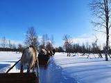 北欧之狼旅行