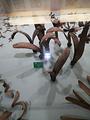 中国科学院西双版纳热带植物园-商店