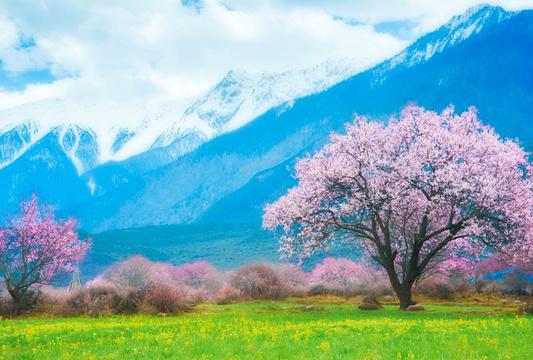 嘎拉桃花村旅游景点图片