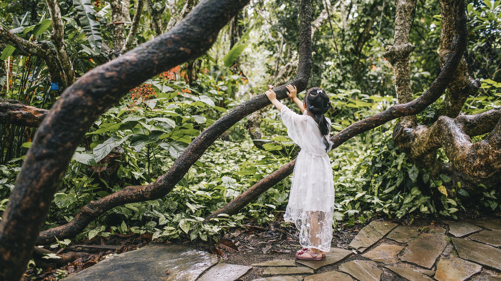 西双版纳雨林2日线路
