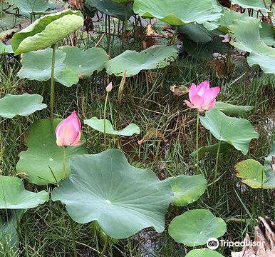 Lotus Lake的图片