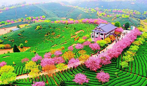 永福樱花园的图片