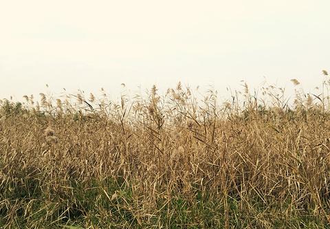 渔舟湾湿地公园的图片