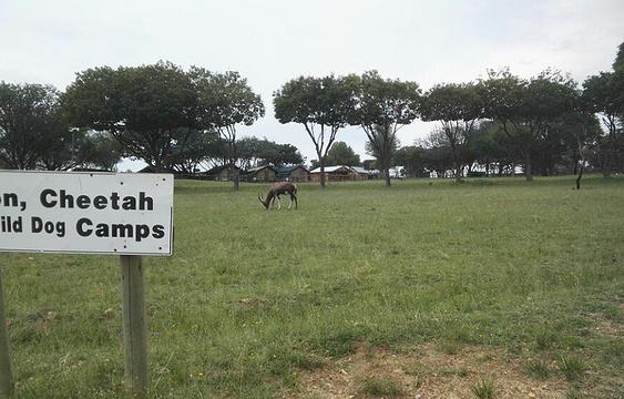 狮子园旅游景点图片