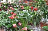 朱雀花卉市场