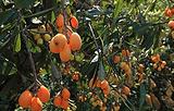 香蜜山果庄