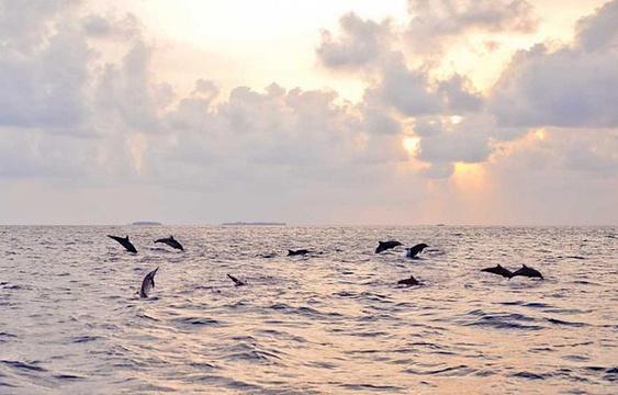 班度士岛日落观海豚体验旅游景点图片