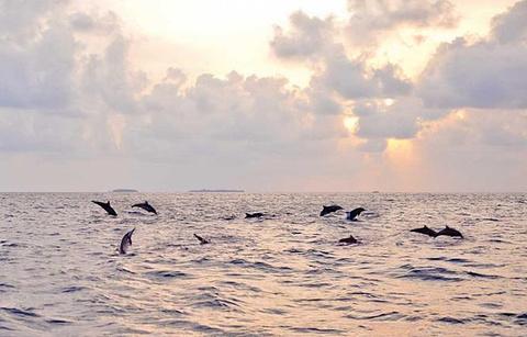 班度士岛日落观海豚体验的图片