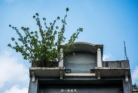龙津西路的图片