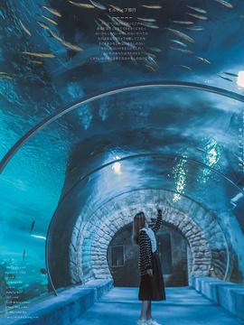 正佳极地海洋世界旅游景点攻略图