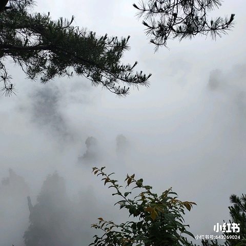 """""""...,天门山最吸引人的莫过于玻璃栈道了,天门山因植被众多也被世人誉为被世人最美的空中花园和天界仙境_张家界国家森林公园""""的评论图片"""