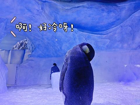 成都海昌极地海洋公园旅游景点攻略图