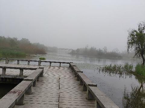 洋湖湿地公园旅游景点图片