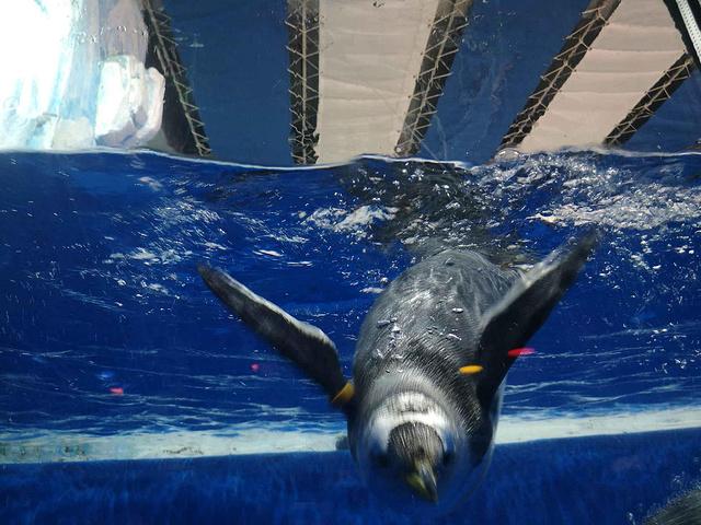 """""""等到14点就开始看海洋之心表演了,很震撼。【关于门票】成人票和学生票,可以现场买。大白鲸超级可爱_哈尔滨极地馆""""的评论图片"""