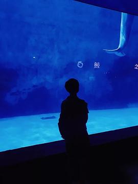 天津海昌极地海洋公园旅游景点攻略图