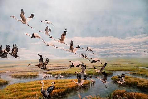 山东黄河三角洲国家级自然保护区湿地博物馆旅游景点攻略图