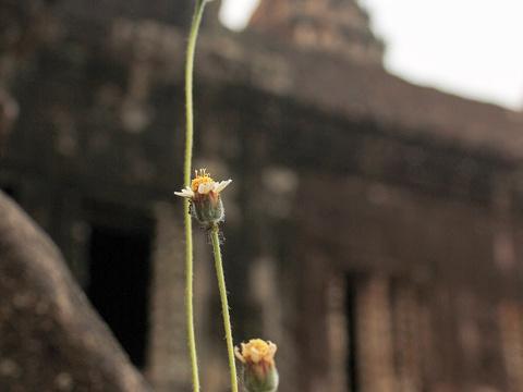 吴哥寺旅游景点图片