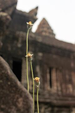 吴哥寺的图片