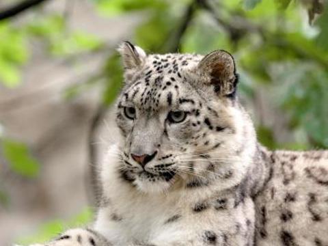 北京野生动物园旅游景点图片