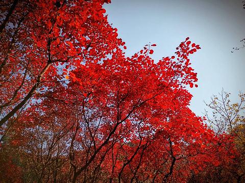红叶谷旅游景点图片