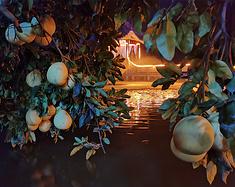 耄耋老者享脐橙丰收的喜悦