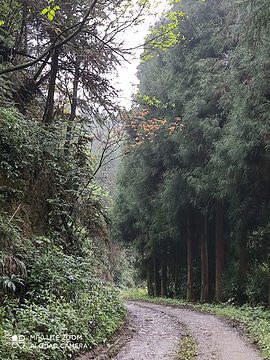 天星国家森林公园旅游景点攻略图