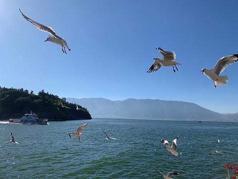南诏风情岛旅游景点攻略图