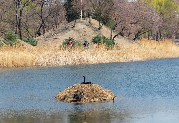 """""""著名的西洋楼遗址位于长春园北部,尤其是大水法遗址,是参观圆明园最让人印象深刻的画面_圆明园""""的评论图片"""
