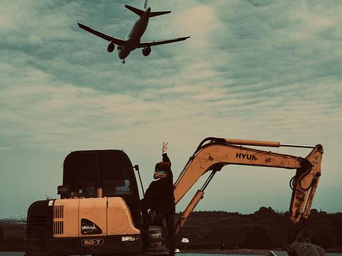 空港花田旅游景点图片