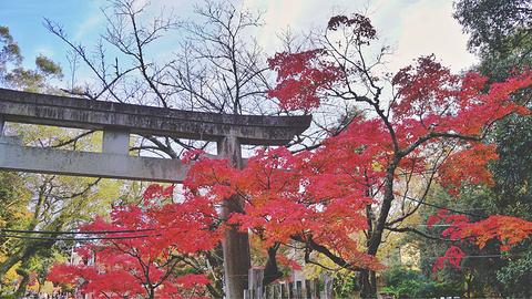 奈良旅游图片