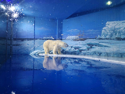 哈尔滨极地馆旅游景点攻略图