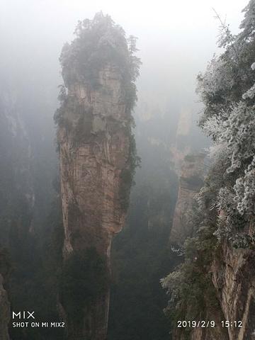 """""""一路风景还好,但由于有雾加上天气寒冷,人也多,赏景也在其次。网上介绍的导游不必了,又贵又不靠谱_张家界国家森林公园""""的评论图片"""
