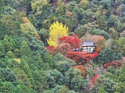 龟山公园旅游景点图片