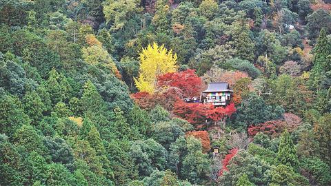 龟山公园的图片