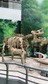 恐龙化石博物馆