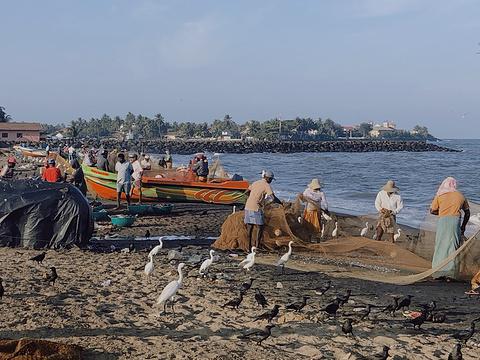 尼甘布海滩旅游景点图片