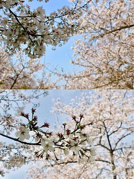 东湖磨山景区旅游景点攻略图