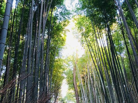 嵯峨野竹林旅游景点图片