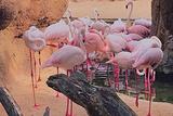 瓦伦西亚动物园